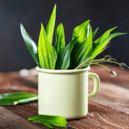 plantago-pharysol-tos-pharysol-3